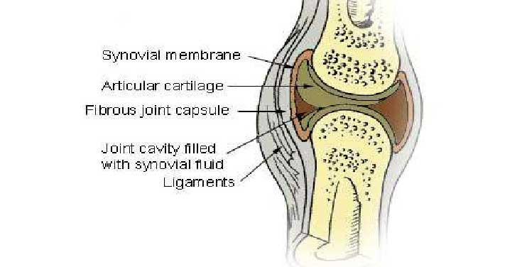 Cuases, Symptoms and Treatment Knee Synovitis
