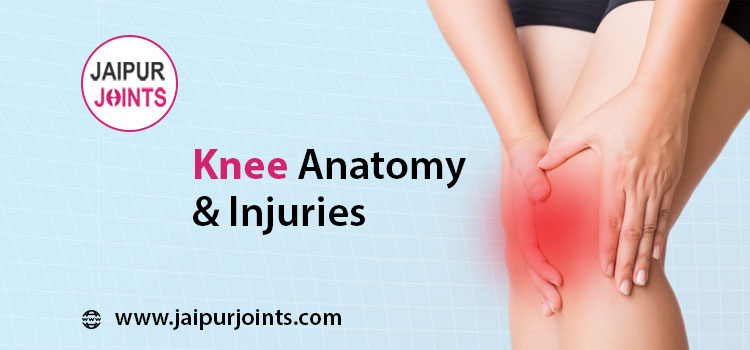 Knee Anatomy & Injuries